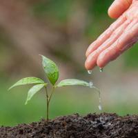 consultation-bone-reading-livelihood-earth-healing